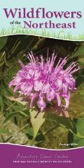 Wildflowers of the Northeast: Your Way to Easily Identify Wildflowers