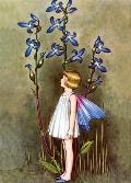 Fairy with Blue Lobelia Blank Greeting Card [With 6 Envelopes]