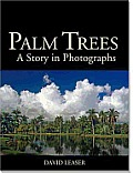 Palm Trees A Story In Photographs