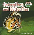 Caterpillars & Butterflies