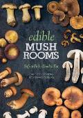 Edible Mushrooms Safe to Pick Good to Eat