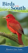 Birds of the South: Your Way to Easily Identify Backyard Birds