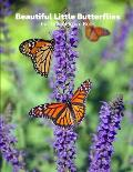 Beautiful Little Butterflies Full-Color Picture Book: Butterflies Picture Book for Children, Seniors and Alzheimer's Patients -Insects Wildlife Nature