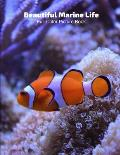Beautiful Marine Life Full-Color Picture Book: Marine Life Picture Book for Children, Seniors and Alzheimer's Patients -Mammals Wildlife Nature