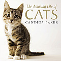 The Amazing Life of Cats