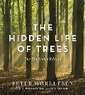 Hidden Life of Trees The Illustrated Edition
