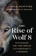 Rise of Wolf 8 Witnessing the Triumph of Yellowstones Underdog