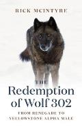 The Redemption of Wolf 302: From Renegade to Yellowstone Alpha Male