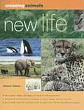Amazing Animals New Life Mating Concepti