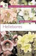 RHS Hellebores