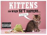 Kittens for When Sht Happens