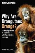 Why are Orangutans Orange