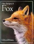 How To Spot A Fox
