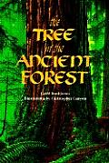 Tree In The Ancient Forest
