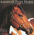 American Paint Horse A Photographic Portrayal