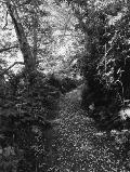 Robert Adams An Old Forest Road