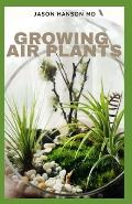 Growing Air Plants: Everything You Need To Know About Growing Air Plants