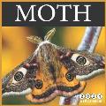 Moth 2021 Wall Calendar: 16 Months calendar 2021, Cute Butterflies Calendar 2021