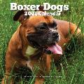 Boxer Dogs 2021 Wall Calendar: Lover Gifts